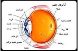 پاورپوینت ساختمان چشم انسان (آناتومی چشم) بیماری های چشمی جراحی های چشم دانستنیهای چشم